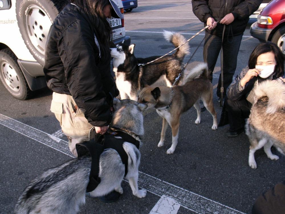 A Sequel to a story of Shikoku Pilgrimage, Dec.30th 2005_c0049299_22545112.jpg