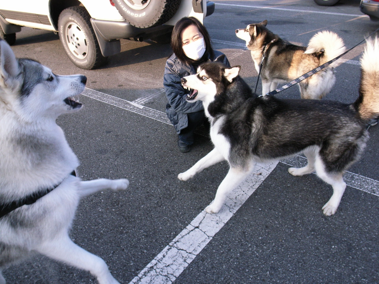 A Sequel to a story of Shikoku Pilgrimage, Dec.30th 2005_c0049299_2332711.jpg