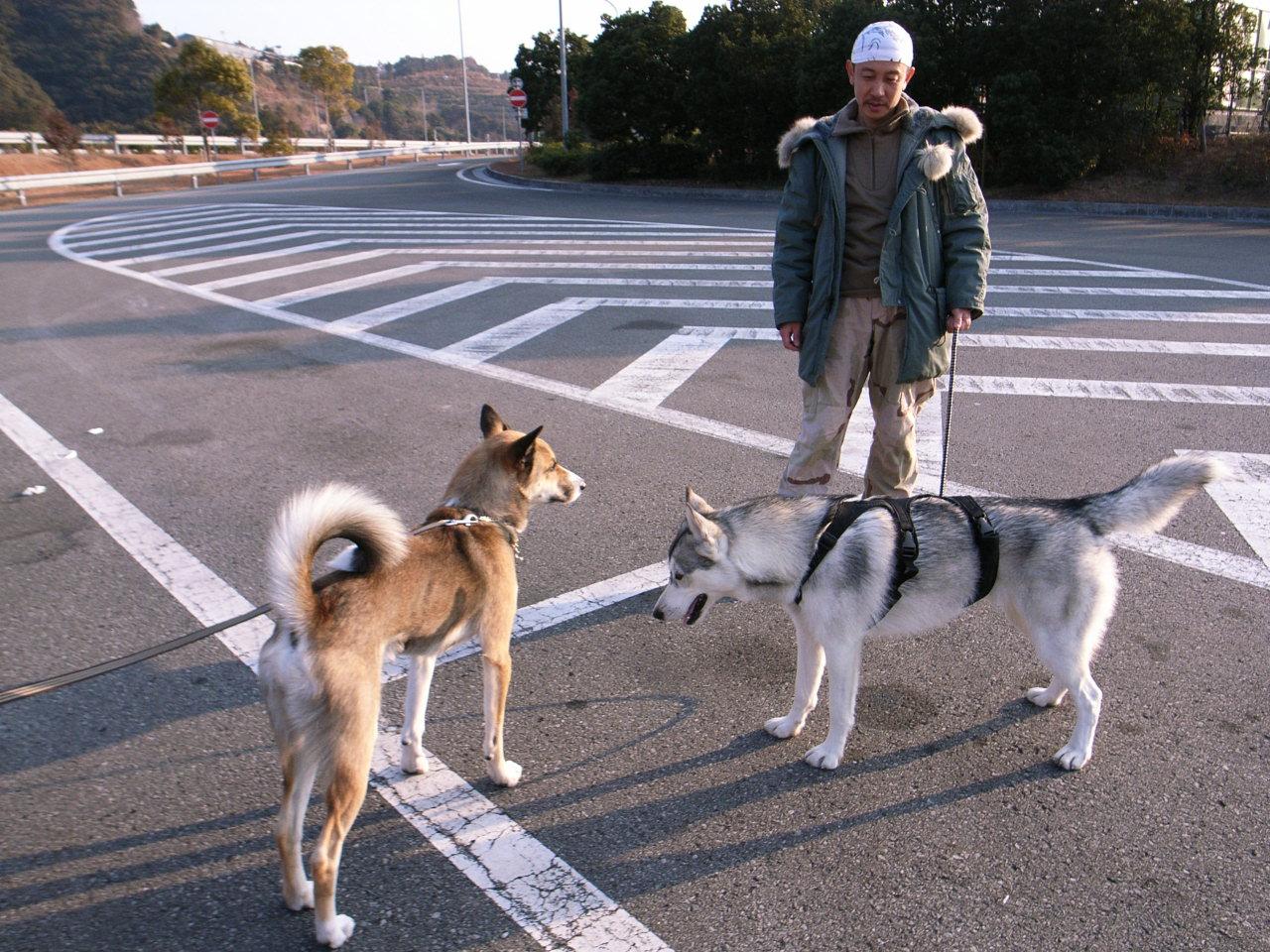 A Sequel to a story of Shikoku Pilgrimage, Dec.30th 2005_c0049299_2343376.jpg
