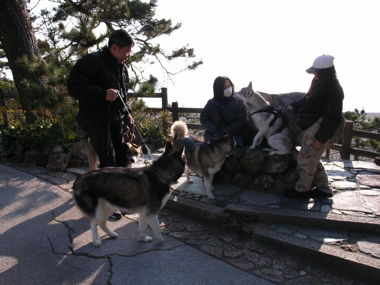 A Sequel to a story of Shikoku Pilgrimage, Dec.30th 2005_c0049299_2355422.jpg