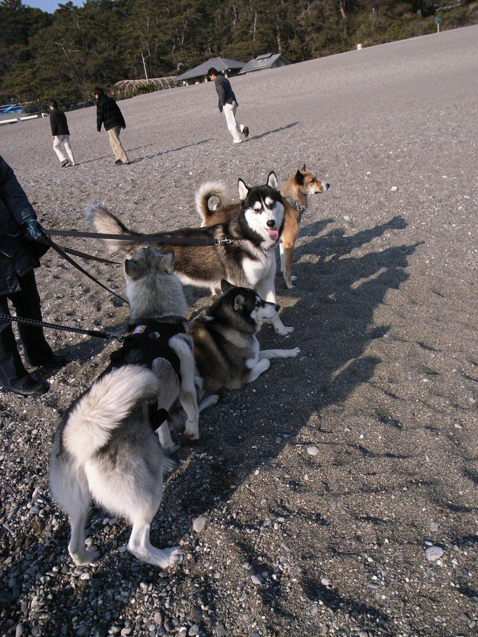 A Sequel to a story of Shikoku Pilgrimage, Dec.30th 2005_c0049299_2372926.jpg