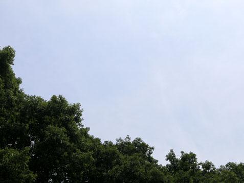 今日も暑いですね~ヽ(^o^)丿_c0140599_11595710.jpg