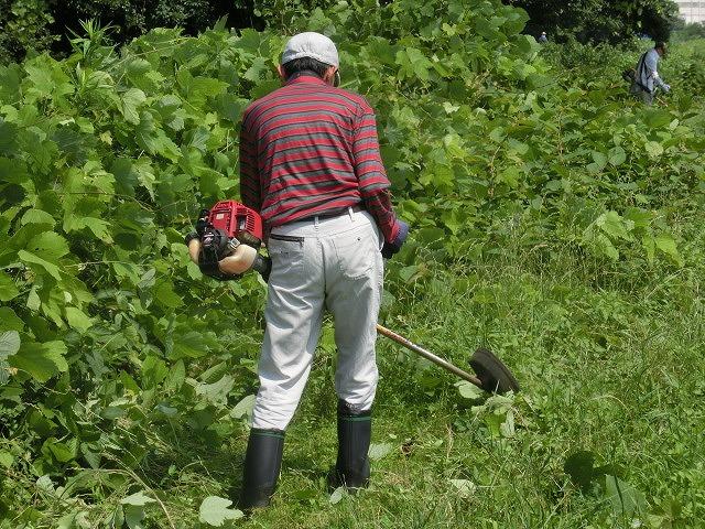 暑い中、強力な助っ人20名以上で完遂! 滝川の草刈り清掃_f0141310_7482471.jpg