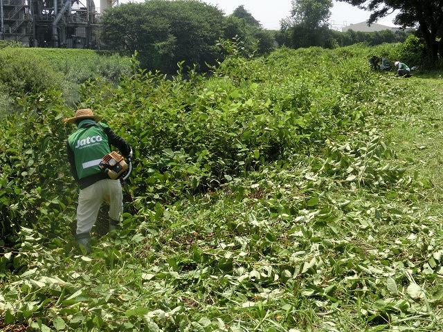 暑い中、強力な助っ人20名以上で完遂! 滝川の草刈り清掃_f0141310_748729.jpg