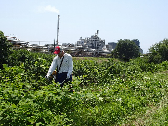 暑い中、強力な助っ人20名以上で完遂! 滝川の草刈り清掃_f0141310_7491334.jpg