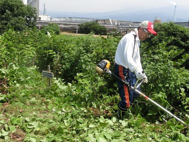 暑い中、強力な助っ人20名以上で完遂! 滝川の草刈り清掃_f0141310_74933.jpg