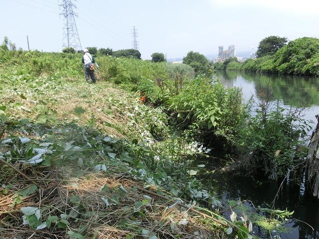 暑い中、強力な助っ人20名以上で完遂! 滝川の草刈り清掃_f0141310_750233.jpg