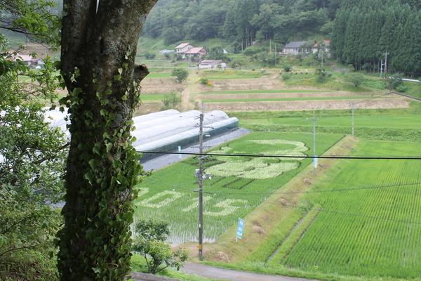 H27年度稲作体験田んぼアート~生き物観察会編~_b0281312_1541592.jpg