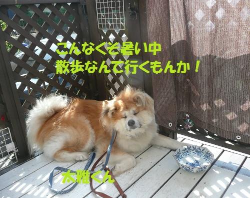 f0121712_16234538.jpg