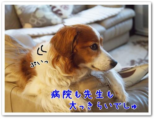 d0013149_2119488.jpg