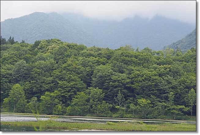 南会津・・・観音沼森林公園(2)_b0053765_16284617.jpg