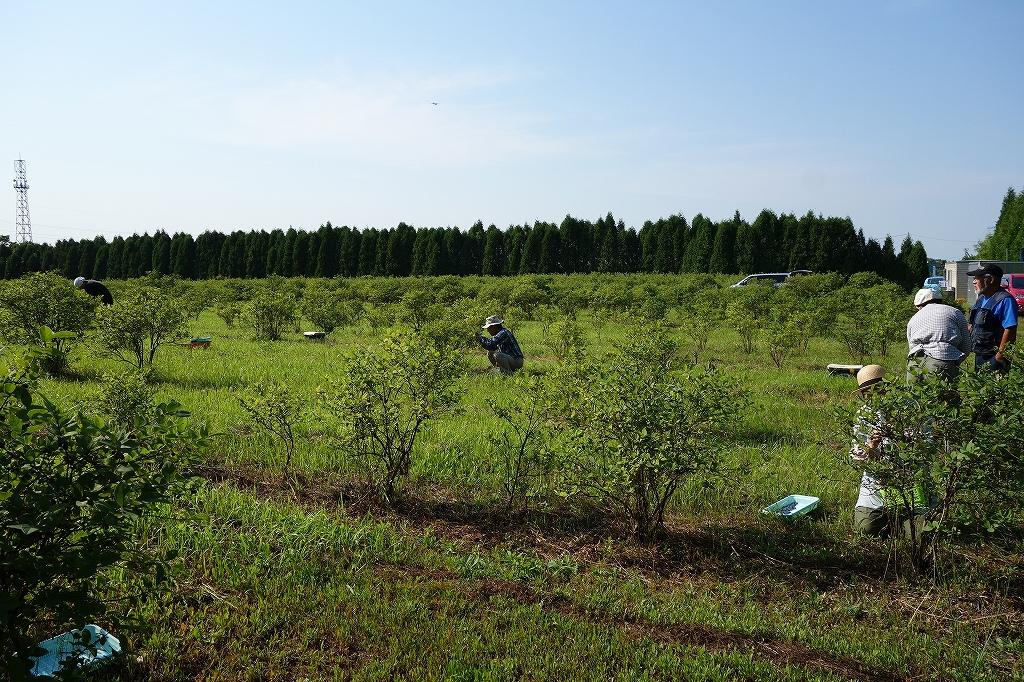 友人の農園でハスカップ狩り_f0138096_16305731.jpg