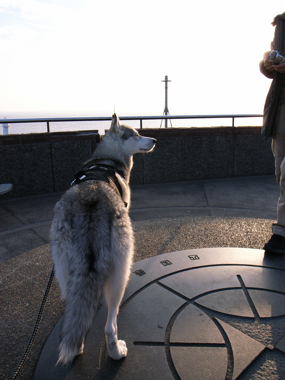 A Sequel to a story of Shikoku Pilgrimage, the later part of Dec.30th 2005_c0049299_22203375.jpg