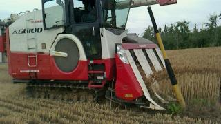小麦畑_d0191211_1651839.jpg