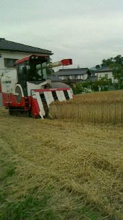 小麦畑_d0191211_1652790.jpg