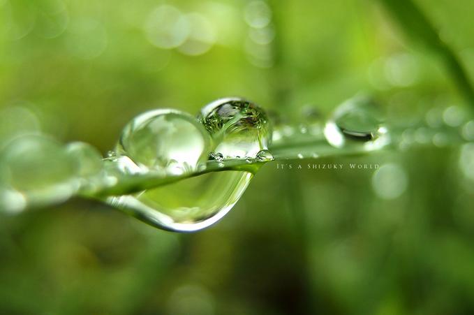 みんなの「紫陽花&雨の季節らしいすてきな一枚」をご紹介!_f0357923_1728411.jpg