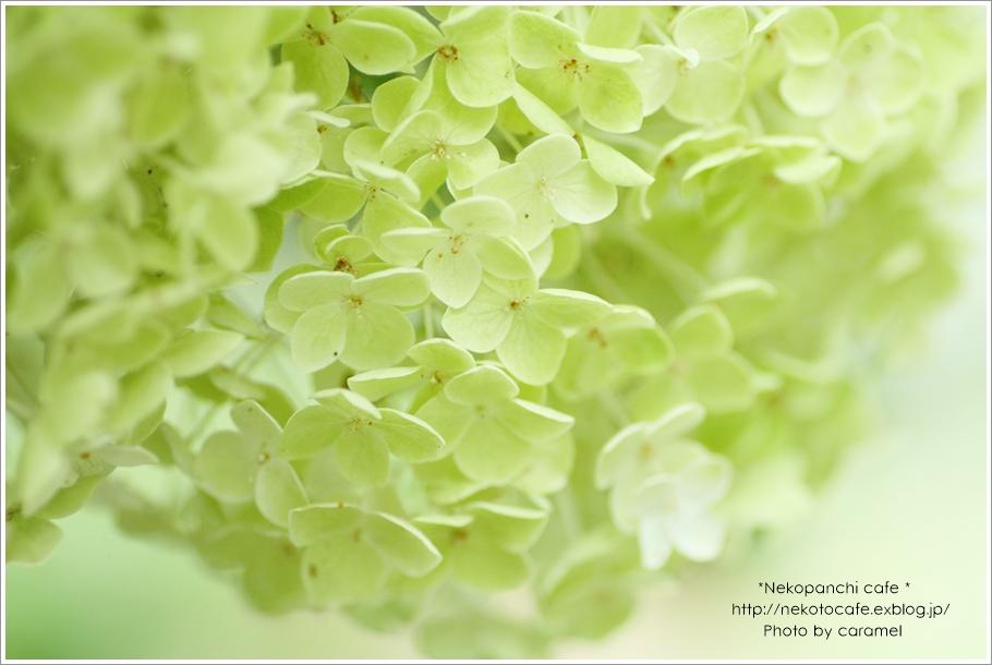 みんなの「紫陽花&雨の季節らしいすてきな一枚」をご紹介!_f0357923_19485971.jpg