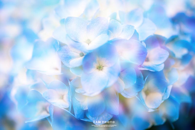 みんなの「紫陽花&雨の季節らしいすてきな一枚」をご紹介!_f0357923_23323612.jpg