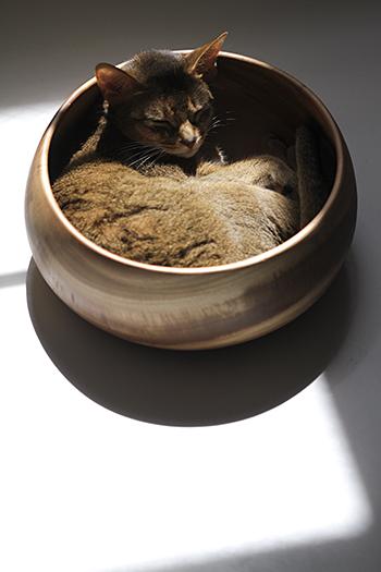 [猫的]ぴったりサイズ_e0090124_0175261.jpg