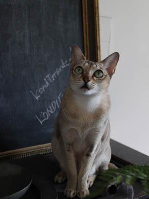 今日の2猫と、イギリスの回転寿司屋さん_b0199526_2352542.jpg