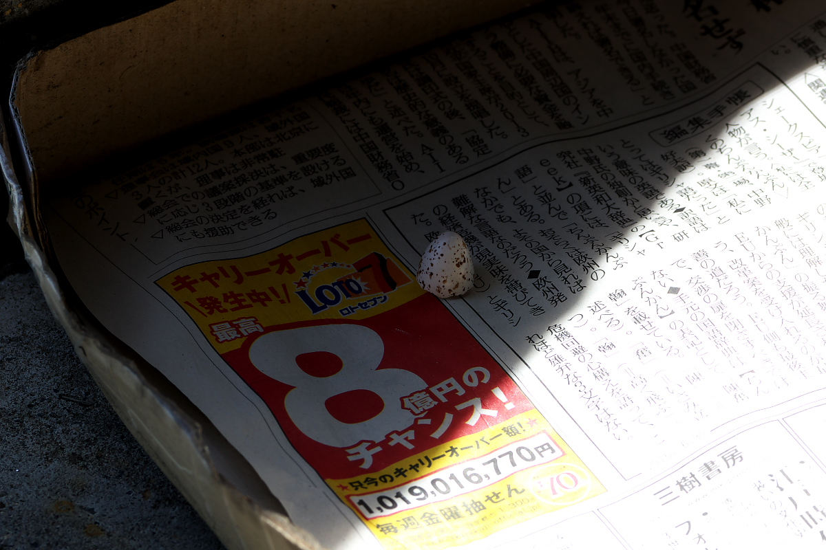 TWKのツバメ・2015~波乱万丈の繁殖活動~【その2】_d0137627_0381776.jpg