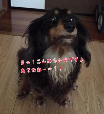 c0342841_10000464.jpg