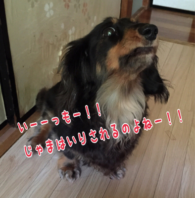 c0342841_10000479.jpg