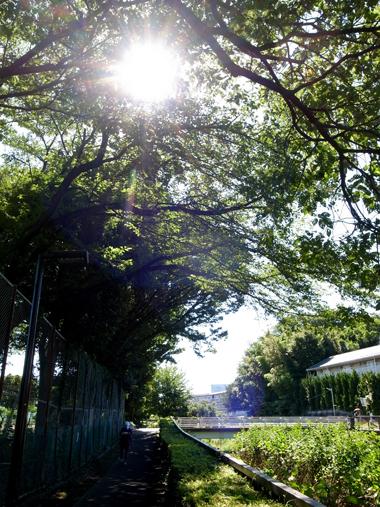 夏朝散歩_e0071652_1152862.jpg