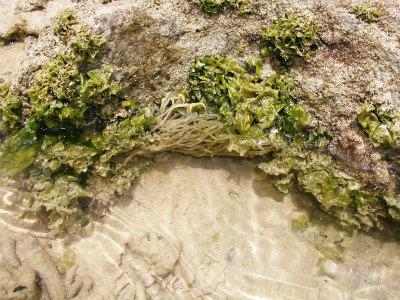 カーミージーの海散歩③_c0180460_1314088.jpg