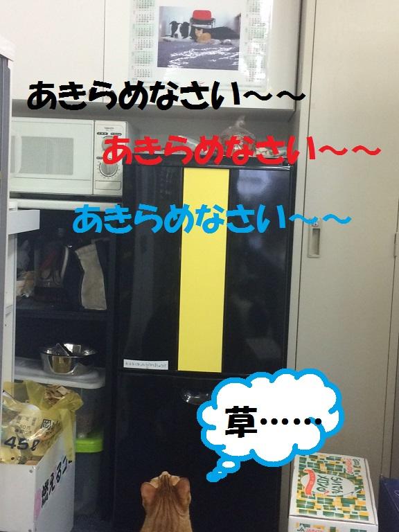 c0226073_187184.jpg
