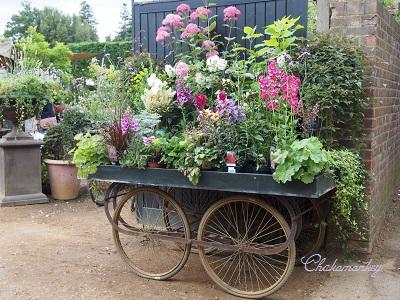 Petersham Nurseriesの紫陽花とダリア_f0238789_23571098.jpg