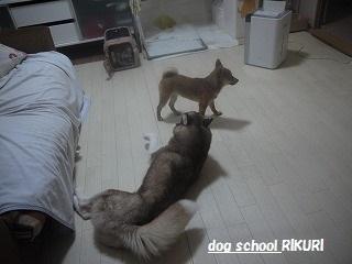 RIKURI幼稚園 ~ ふくちゃん ~_a0284100_1212057.jpg
