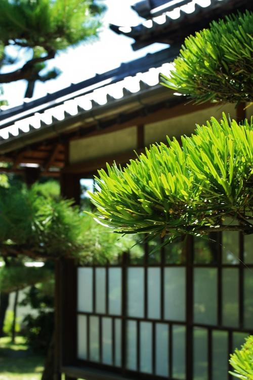 茶和や香(37)、六鹿茶遊会(26)_b0220318_9143472.jpg