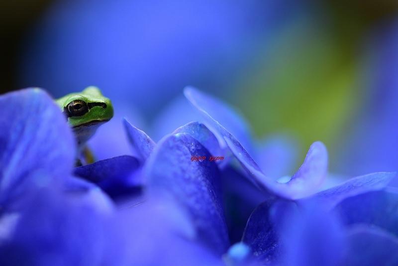 みんなの「紫陽花&雨の季節らしいすてきな一枚」をご紹介!_f0357923_12103842.jpg