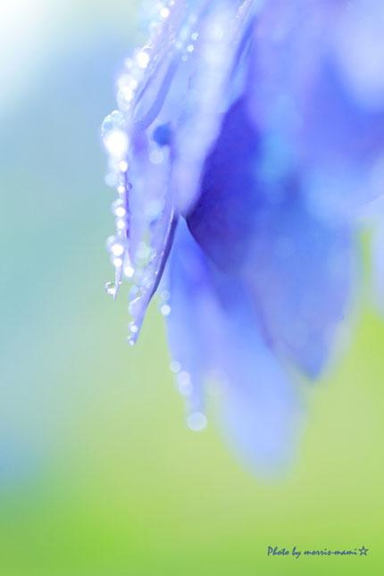 みんなの「紫陽花&雨の季節らしいすてきな一枚」をご紹介!_f0357923_12274228.jpg