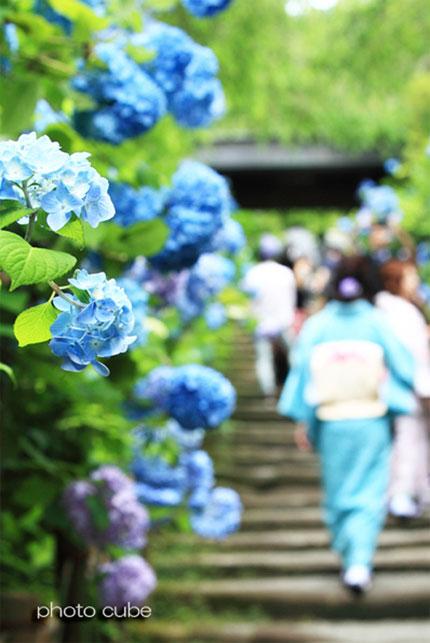 みんなの「紫陽花&雨の季節らしいすてきな一枚」をご紹介!_f0357923_12275589.jpg