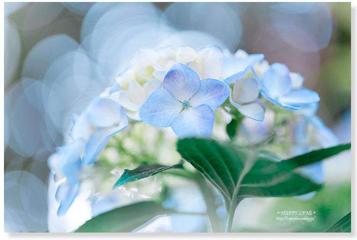 みんなの「紫陽花&雨の季節らしいすてきな一枚」をご紹介!_f0357923_13314964.jpg