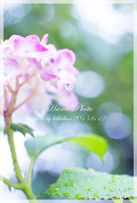 みんなの「紫陽花&雨の季節らしいすてきな一枚」をご紹介!_f0357923_14303080.jpg