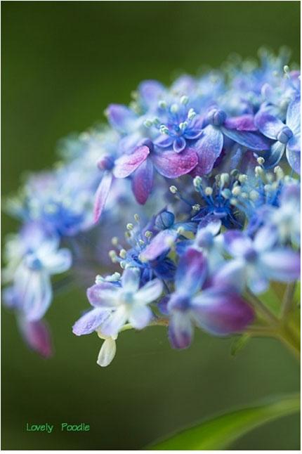 みんなの「紫陽花&雨の季節らしいすてきな一枚」をご紹介!_f0357923_14565168.jpg