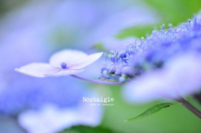 みんなの「紫陽花&雨の季節らしいすてきな一枚」をご紹介!_f0357923_15371771.jpg