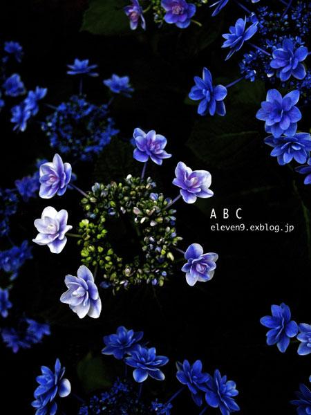 みんなの「紫陽花&雨の季節らしいすてきな一枚」をご紹介!_f0357923_16521872.jpg