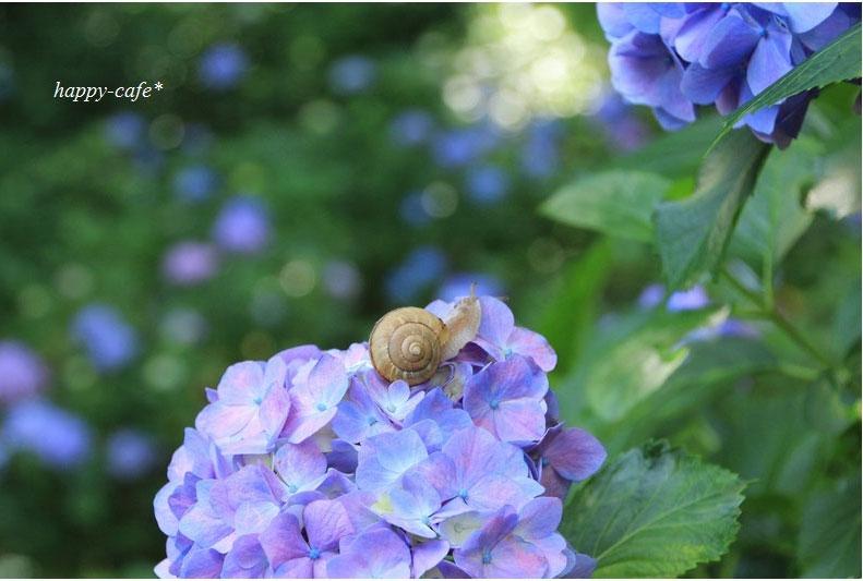 みんなの「紫陽花&雨の季節らしいすてきな一枚」をご紹介!_f0357923_18313110.jpg
