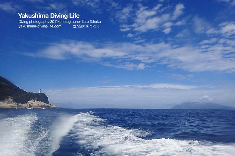 黒島(八重山諸島)から旅をしてきたタイマイ再び!_b0186442_11141172.jpg