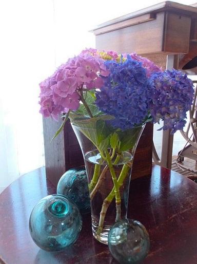 紫陽花の季節_d0246960_2241154.jpg