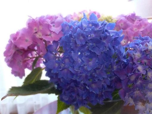 紫陽花の季節_d0246960_22413877.jpg