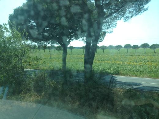 イタリアの車窓から カスティリオンチェッロ-ピサ中央駅_a0136671_058291.jpg