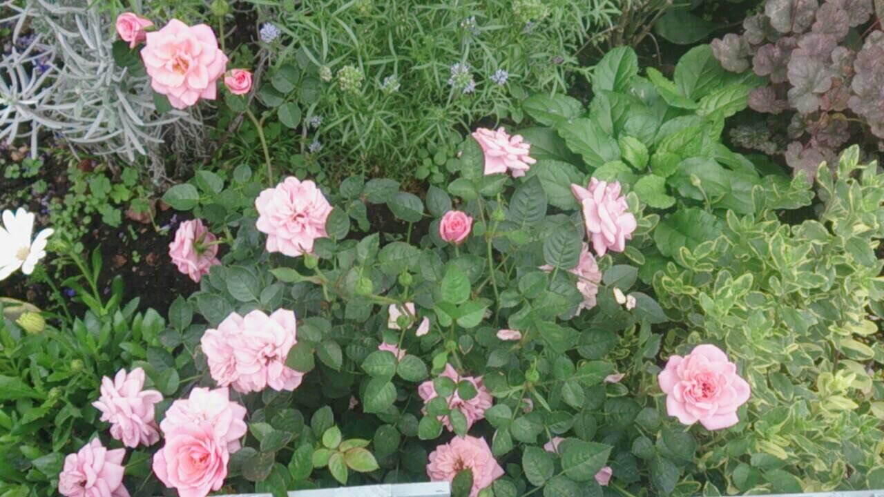 お花良くなってますか?_a0292194_1775678.jpg