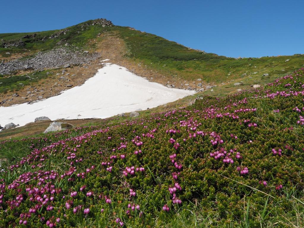 感動の十勝岳から富良野岳、7月16日-速報版-_f0138096_2021047.jpg