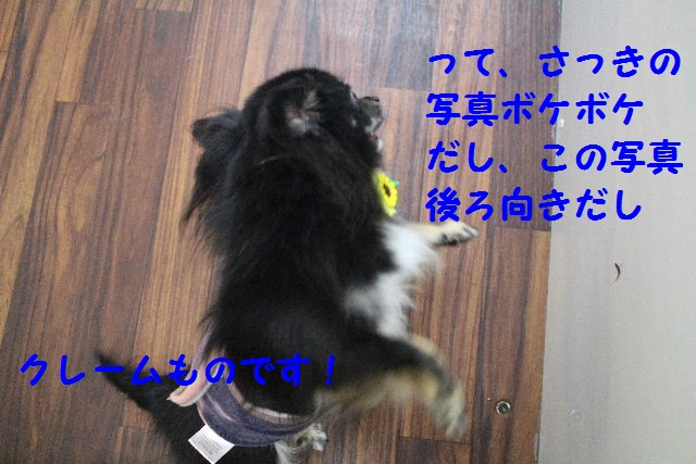 b0130018_11145252.jpg