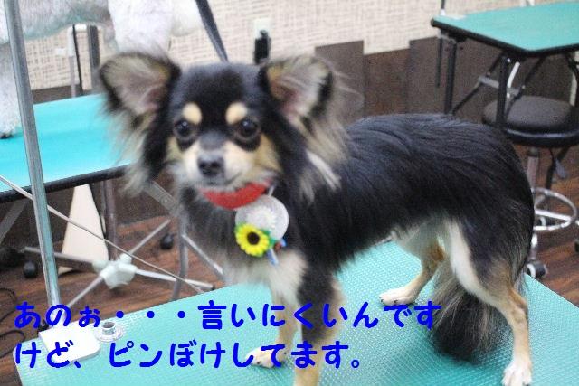 b0130018_11221315.jpg